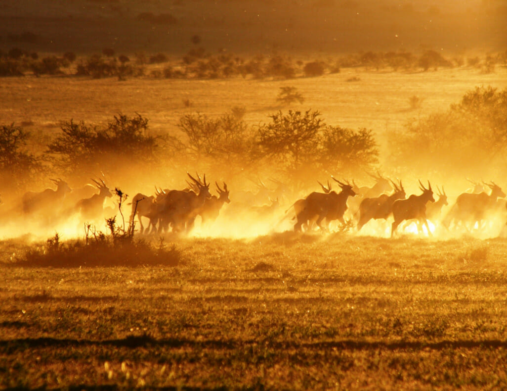 Safari Top 9 Afrika