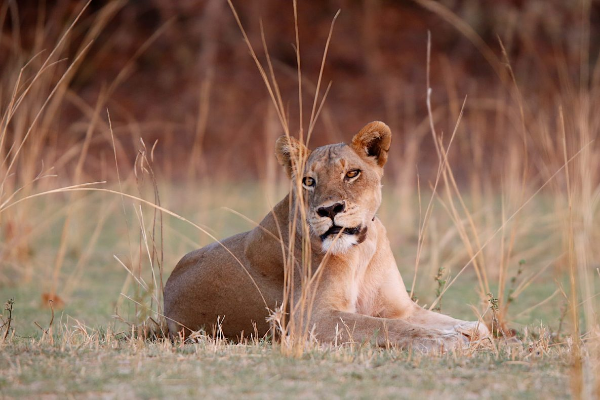 Blog Verbanck - Zambia-South Luangwa