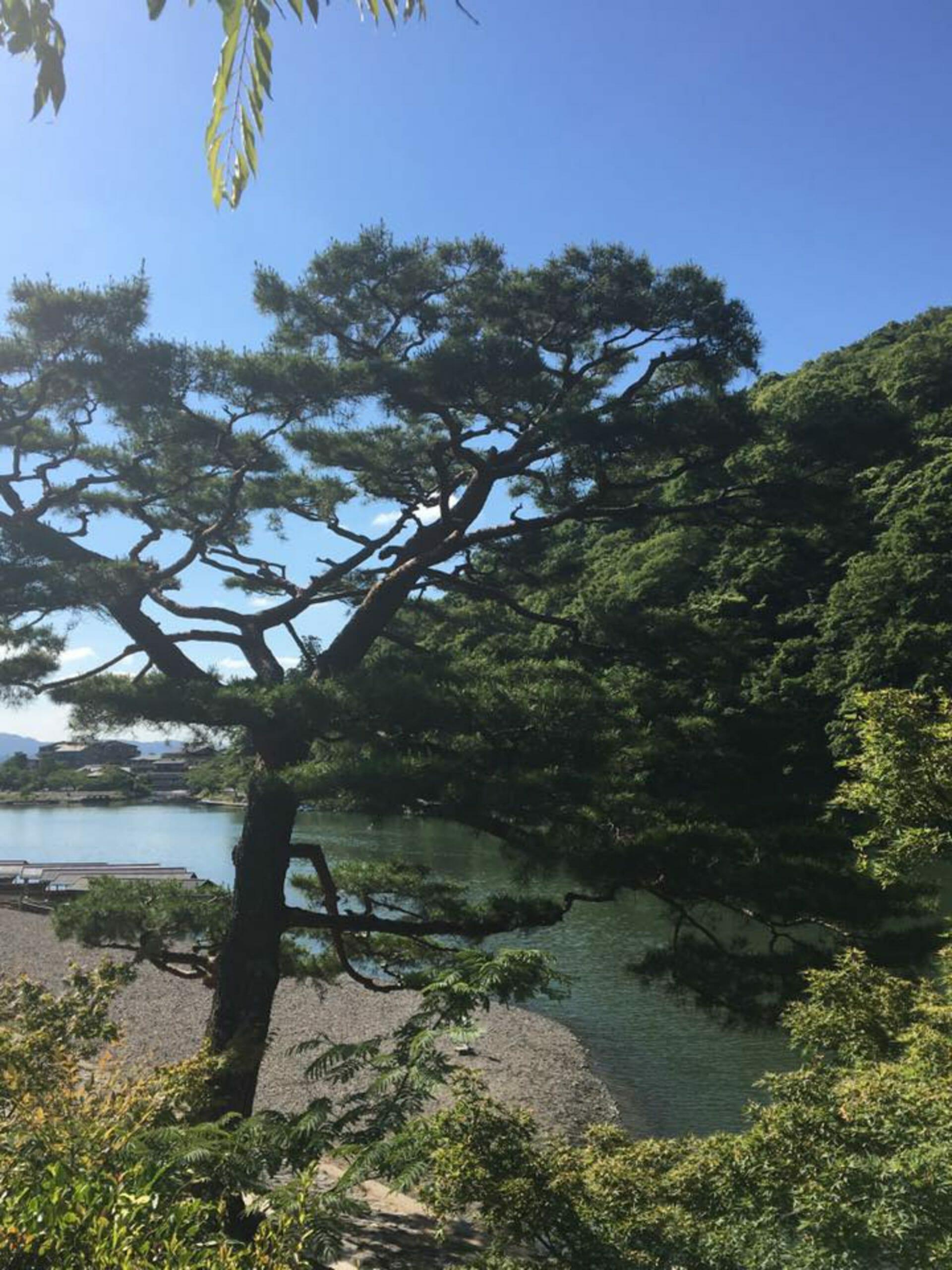Blog Japan - Carla