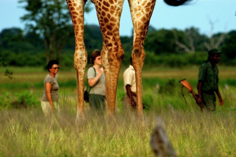 Safari with private guide
