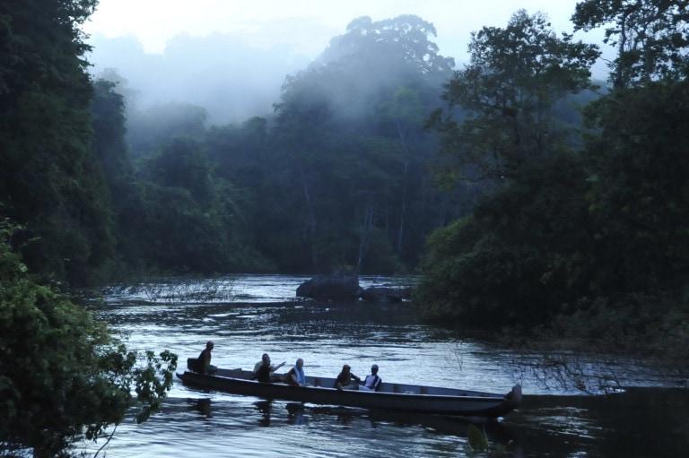 French Guiana Jungle