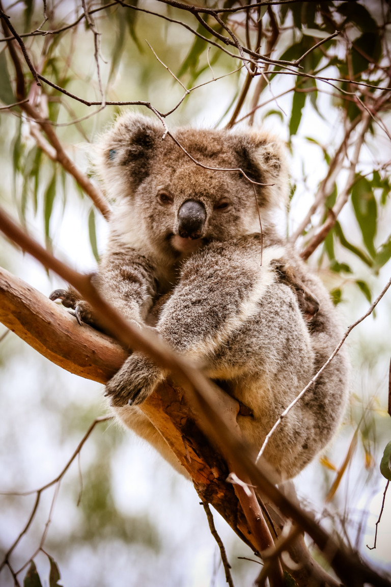 Australia From thriving art scene to extreme wilderness