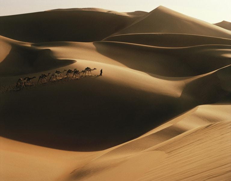 Marokko reizen, woestijn, kamelen