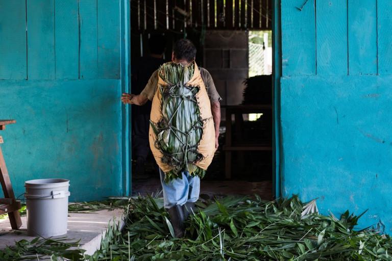 Guatemala reizen, Uaxactun