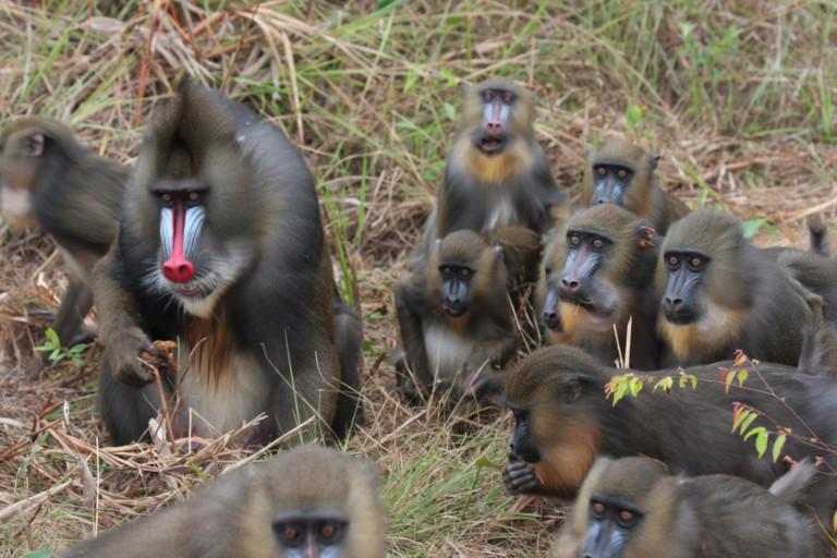 Gabon, Africa's last Eden