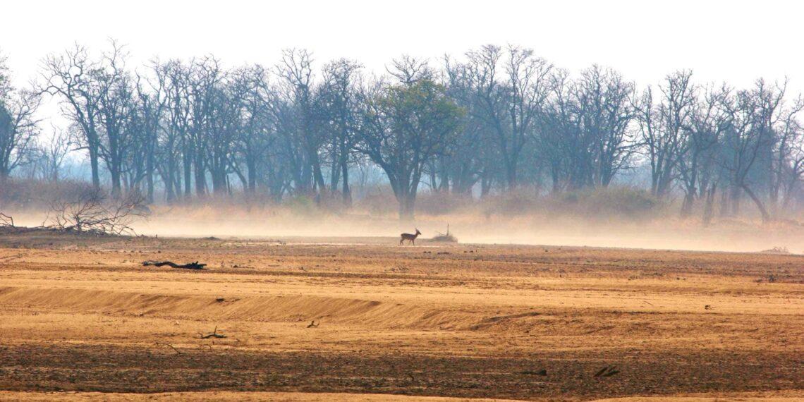 De toekomst van wildlife toerisme en natuurbehoud in Zambia, Blog, Zambia