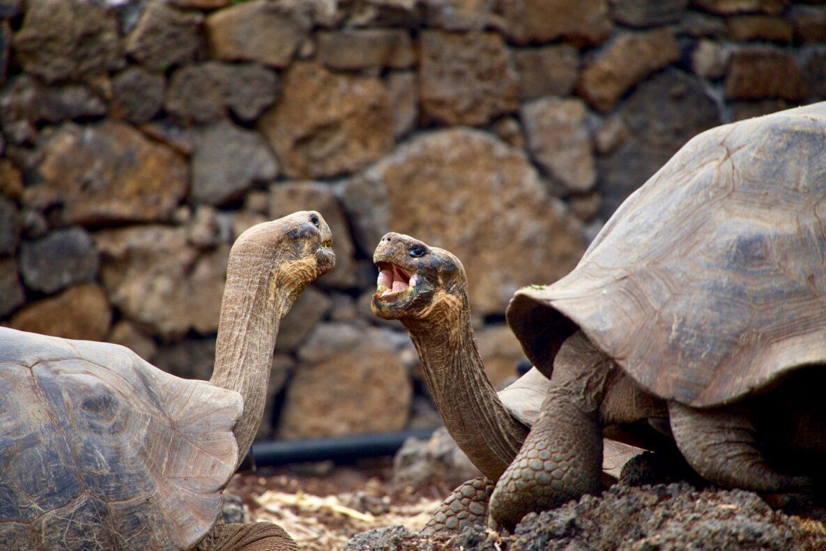 Ecuador en Galapagos, Schildpadden